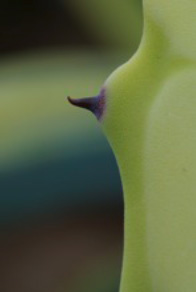 Timo Loorits - Kaunis kaktus